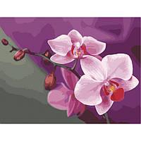 Картина по номерам 40*50 см. Идейка (без коробки) Розовые орхидеи (КНО 1081), фото 1
