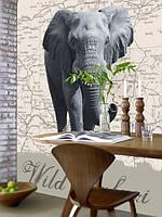Фотообои на стену Слон на карте мира
