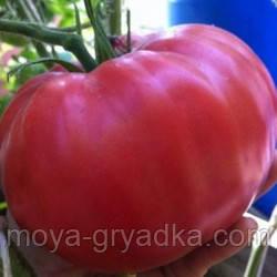 """Насіння томатів Рання любов 0,1г ТМ""""Яскрава"""""""