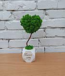 Подарунок до дня святого Валентина коханій, топіарій серце з моху, дерево з моху у вигляді серця, фото 2