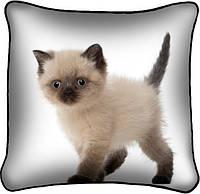 Фото наволочка подушка Британский котёнок