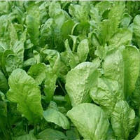 Крес салат 50 г Агролиния