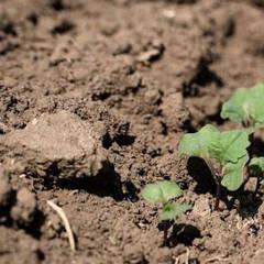 Известкование почв