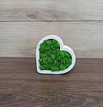 Гіпсове кашпо у формі серця з червоним мохом., фото 2
