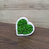 Гіпсове кашпо у формі серця з червоним мохом., фото 3