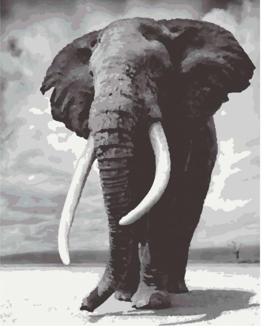 Картины по номерам 40*50 см раскраска антистресс 40х50 см Слон