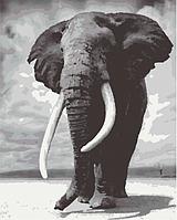 Картины по номерам 40*50 см раскраска антистресс 40х50 см Слон, фото 1