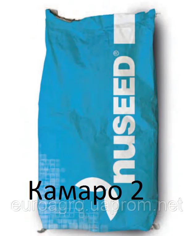 Семена подсолнечника Камаро 2 (Camaro 2) от Нусид® (Nuseed)