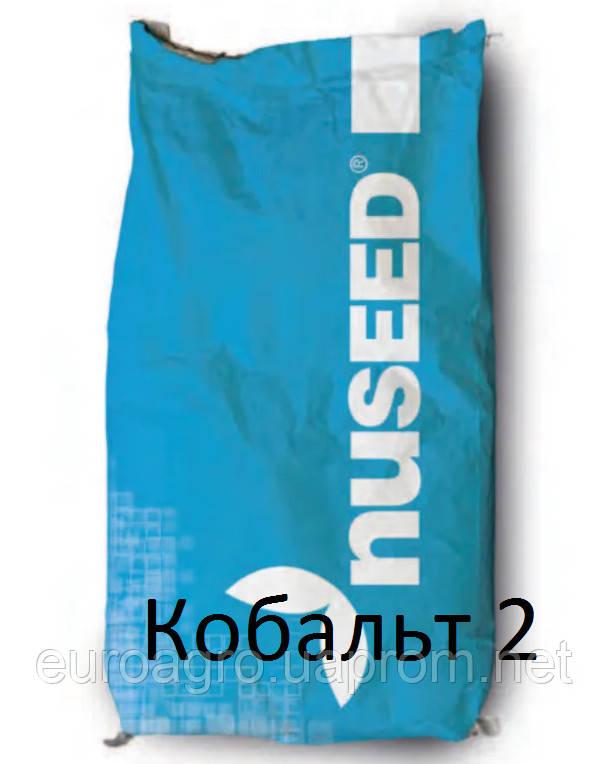 Семена подсолнечника Кобальт 2 от Нусид® (Nuseed)