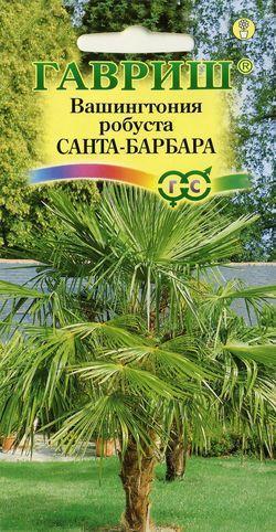 Семена пальма Санта-Барбара Вашингтония