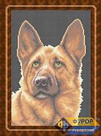 Схема для полной вышивки бисером - Собака немецкая овчарка, Арт. ЖБп4-6