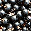 Смородина чёрная