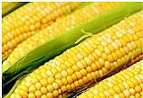 Кукурудза кормовая