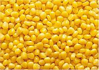 Кукуруза зерно средне сладкая