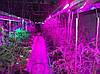 Світлодіодна стрічка для рослин