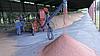 Якісна підготовка зерна до посіву - запорука гарного врожаю!