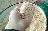 Зернодробарка DONNY-3800 (3.8 кВт) (Для переробки пшениці, ячменю, кукурудзи ), фото 4