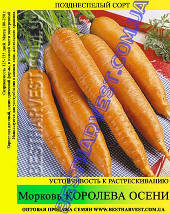 Семена моркови Королева Осени 1 кг, фото 2
