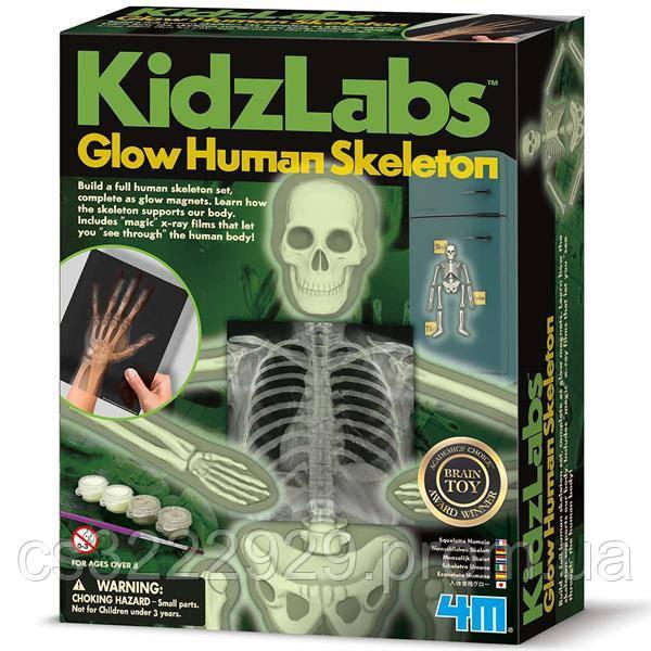 Набір для досліджень 4M Світиться скелет людини (00-03375)