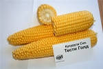 Тести Голд 5000 с.  кукуруза  Агризатен