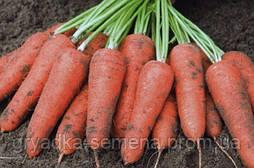Морковь Карини F1 BEJO 50 г
