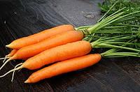 Морковь Наполи F1 Bejo 1.8-2.0,  25000 семян