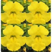 Семена цветов губастика крупноцветкового Yellow 100 драже