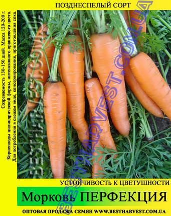 Семена моркови Перфекция 1 кг, фото 2