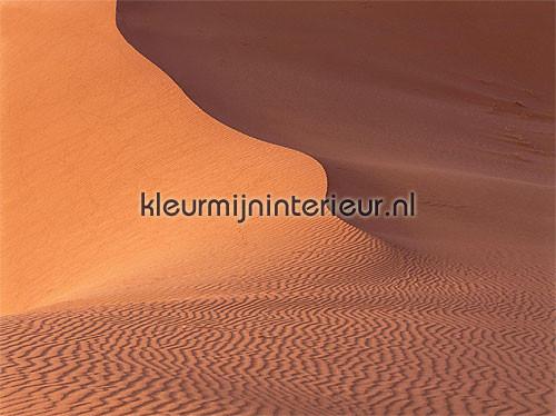 Фото обои Пустыня Eijffinger Sahara 346008