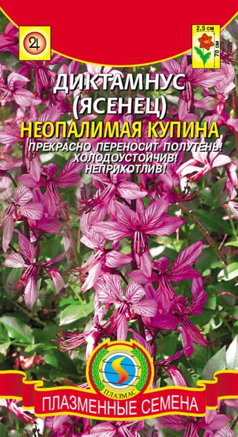 Семена ДИКТАМНУС (ЯСЕНЕЦ) НЕОПАЛИМАЯ КУПИНА  5 шт.
