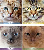 /Тетрадь 48л (клетка) 2623к Котячьи портреты
