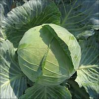 Капуста Бригадир F1 Clause 10000 семян, фото 1