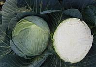 Капуста Центурион F1 Clause 2500 семян, фото 1