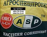 Семена ЕС Бесана устойчивые к жаре и семи расам заразихи A-G+. Высокоурожайный гибрид ЕС Бесана 48ц/га. Экстра, фото 4