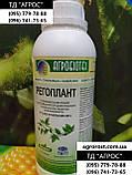 Семена ЕС Бесана устойчивые к жаре и семи расам заразихи A-G+. Высокоурожайный гибрид ЕС Бесана 48ц/га. Экстра, фото 8