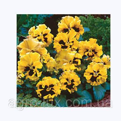 Семена цветов фиалки Карусель Yellow 100 с