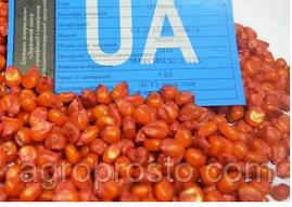 Гибрид кукурузы Пивиха (ФАО 180)