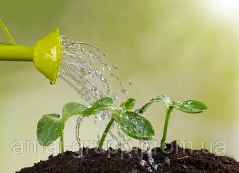 Особенности полива растений в домашнем огороде