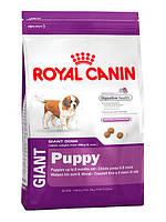 Корм для щенков Royal Canin (Роял Канин) GIANT PUPPY для гигантских пород до 8 месяцев, 15 кг