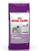 Корм Royal Canin (Роял Канин) GIANT Junior  ACTIVE для щенков гигантских пород 15 кг