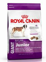 Корм Royal Canin (Роял Канин) GIANT JUNIOR для щенков от 8 до 18/24 месяцев 15 кг(поврежденный мешок)