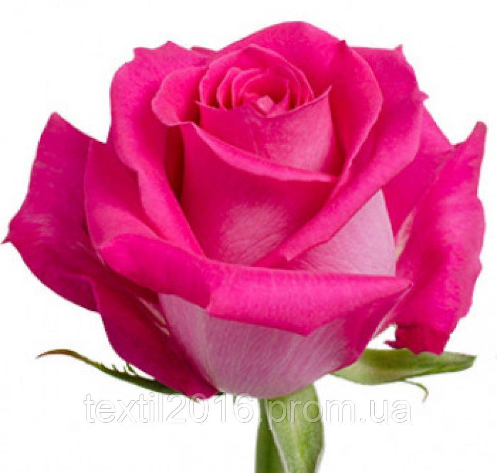 Каталог Роза чайно-гибридная Топаз саженцы