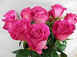 Каталог Роза чайно-гибридная Топаз саженцы, фото 2