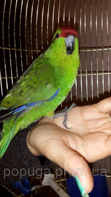 Первый день попугая дома