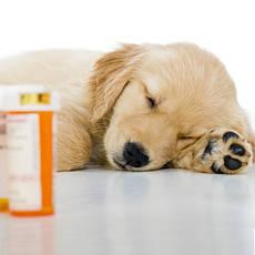 Седативные препараты для животных