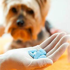 Ветеринарні препарати для лікування сечокам'яної хвороби
