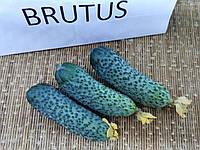 Семена огурца F1, 1000 семян, для фермеров, ZKI