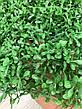Искусственный коврик Хедж - трава . Коврик панно для декора ( 40 * 60 ), фото 6
