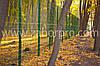 Забор для ограждения парковых зон