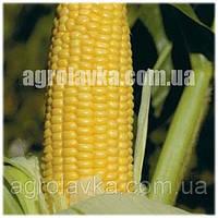 Кукуруза сахарная (Sh2 тип) Уокер F1 (75-77дней) кочан 24-25см (2500 нас.) Lark Seeds